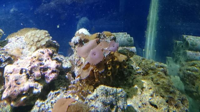 recherche coraux Dsc_0610