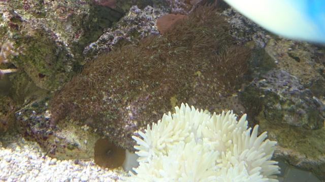 recherche coraux Dsc_0613