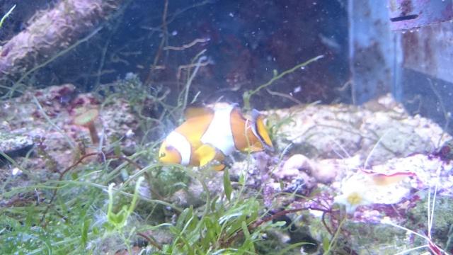 recherche coraux Dsc_0617