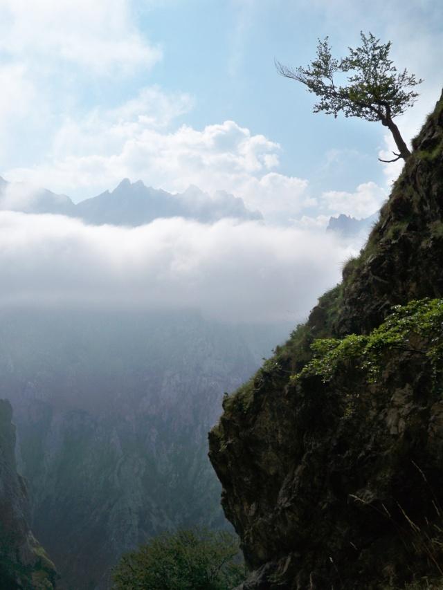 Montañismo: 22-27 de julio 2014 - Picos de Europa  100_8716