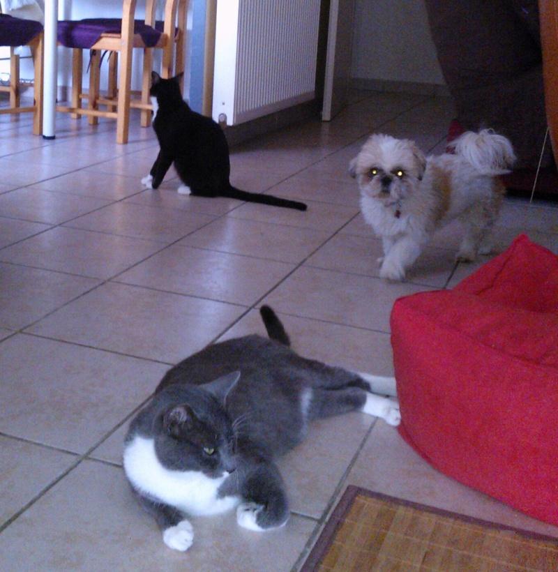 Icare, Jojo (Jocaste), Chouby (Jojue) et Lulu (Lupin) 1794a910