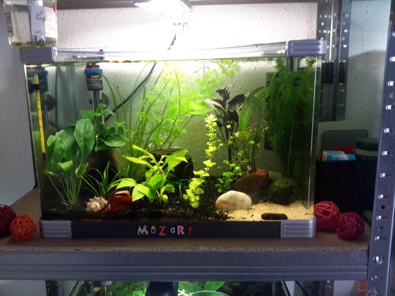 Plantes qui s 'abiment ( trous, pelades ...) 20140611