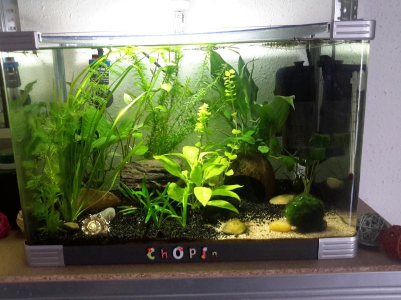 Plantes qui s 'abiment ( trous, pelades ...) 20140612