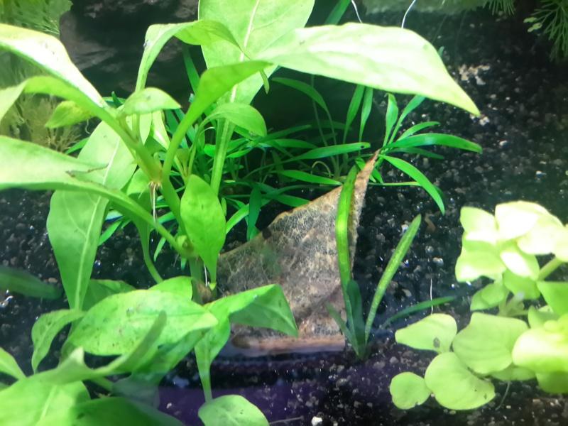 Plantes qui s 'abiment ( trous, pelades ...) 20140617