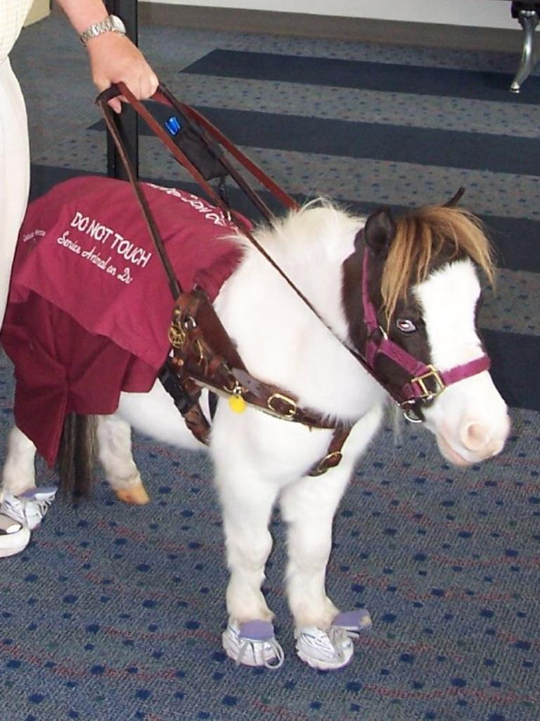 Skipper, cheval miniature américain. - Page 2 Image210