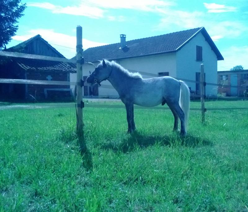 Dusty, cheval miniature américainXanglais - Page 2 Wp_20120