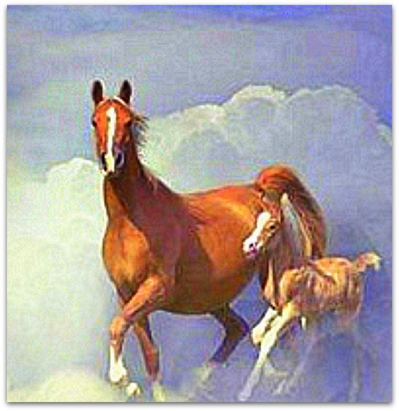 Des chevaux Cheval10