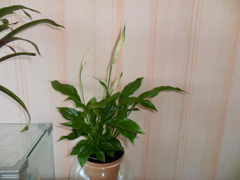 Mini plante en cadeau Sam_9015