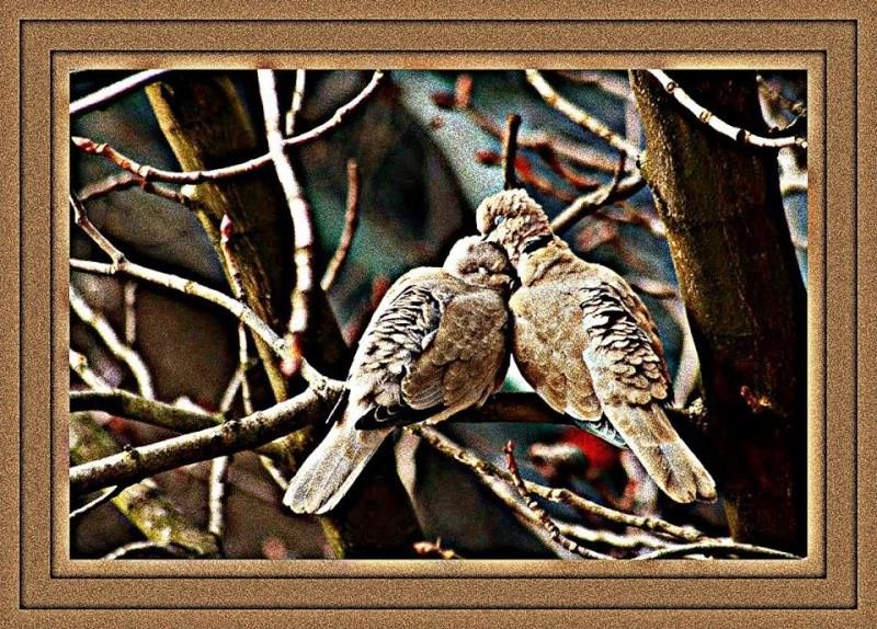 Des oiseaux Tourte11