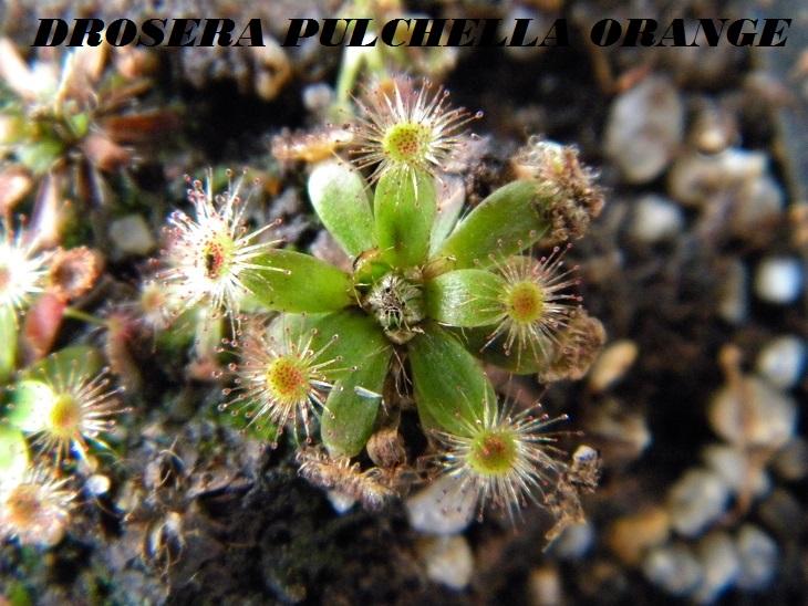 Mes Pygmées en photos.... Dscn6724