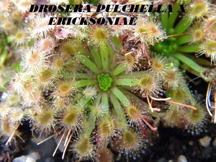 Mes Pygmées en photos.... Dscn6731