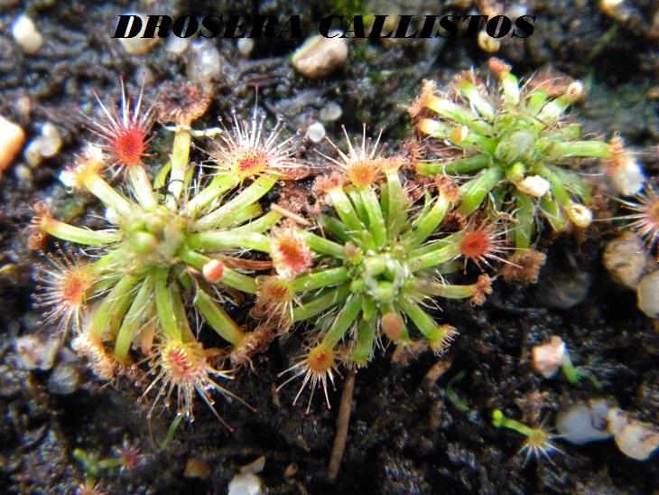 Mes Pygmées en photos.... Dscn6810