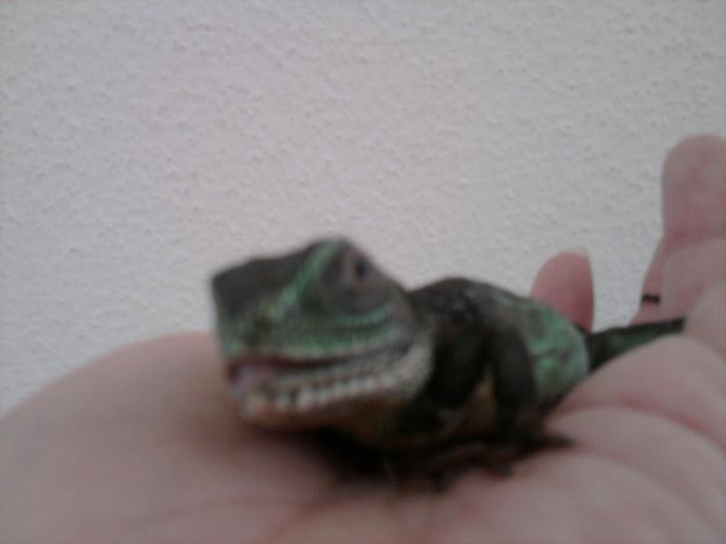 dragon d'eau vu sur un site de vente  Photo013