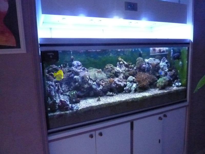 Projet Aqua 450 litres avec ARDUINO - Page 5 P1040916