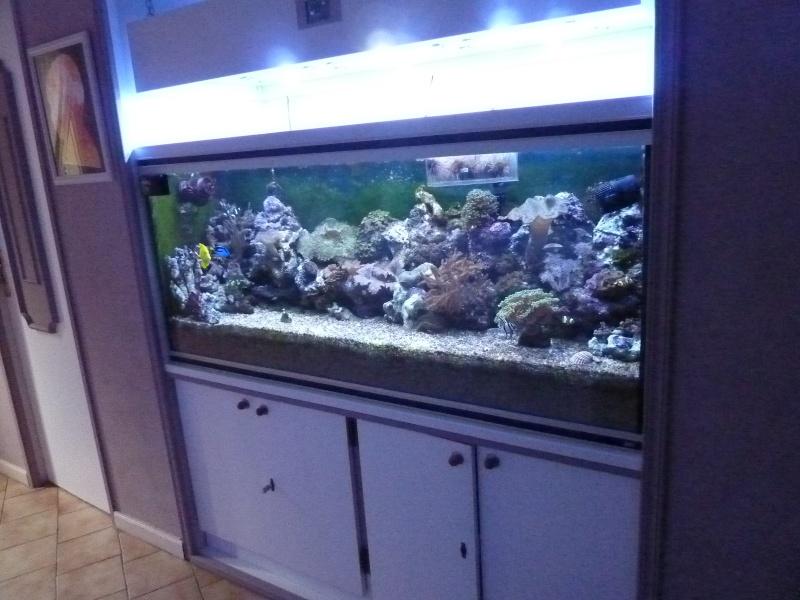 Projet Aqua 450 litres avec ARDUINO - Page 5 P1040917