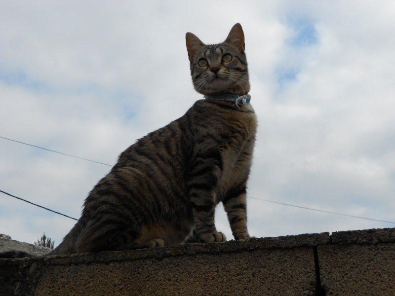 Images de chats. ._. Dscn0312