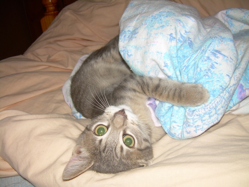 Images de chats. ._. Dscn5110