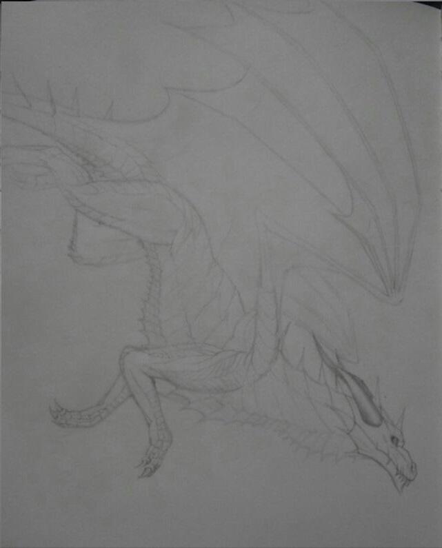 Nitara's Dragons  10409510