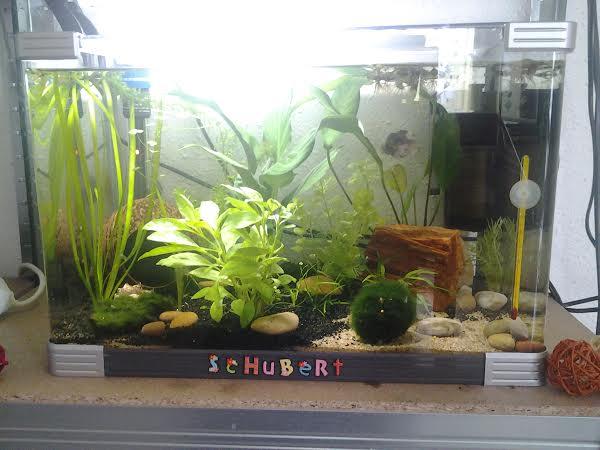 Schubert est décédé Schube10