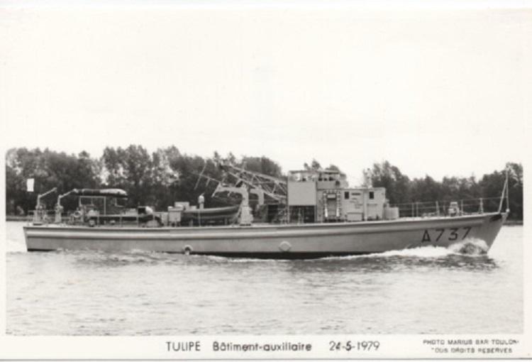 * TULIPE (1954/1984) * Mtcrtj10