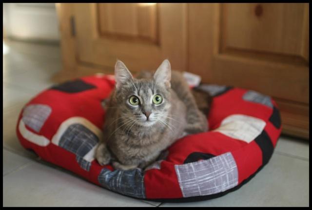 Arrivées prochaines de 3 chats très handicapés. 30_08_11