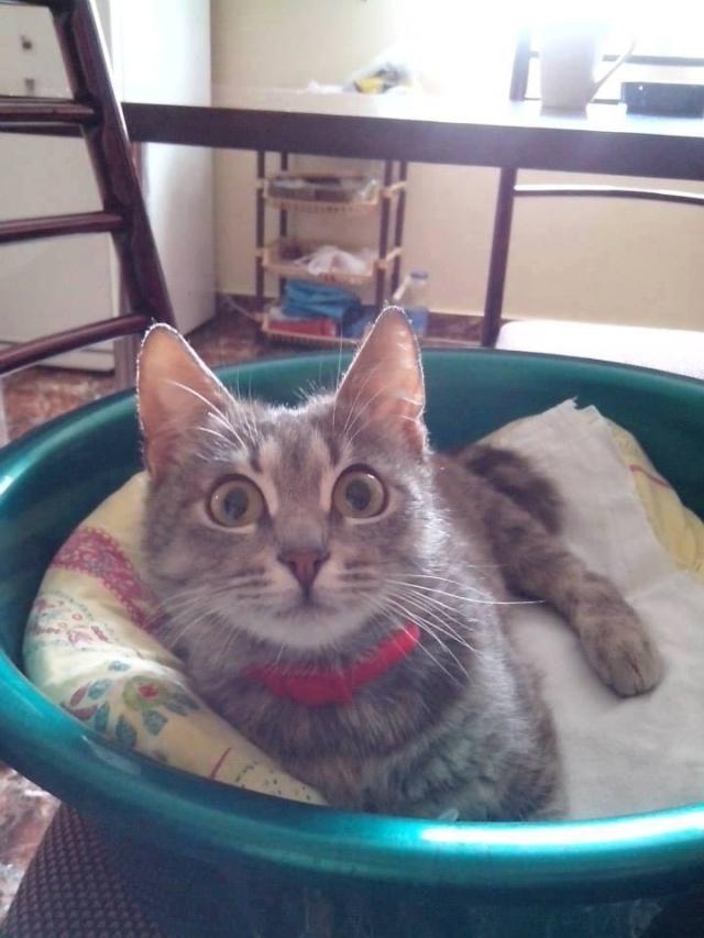 Arrivées prochaines de 3 chats très handicapés. Ladybu10