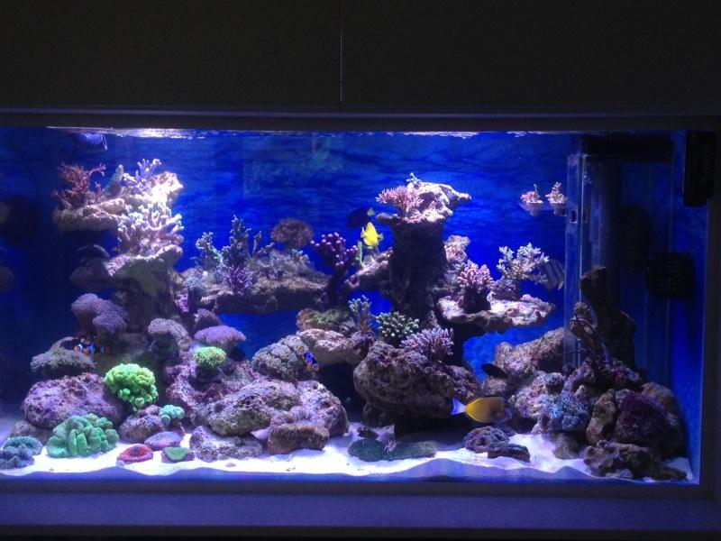 Le nouveau Reef d'Alexpilon, 600l custom - Page 2 Bac_0510