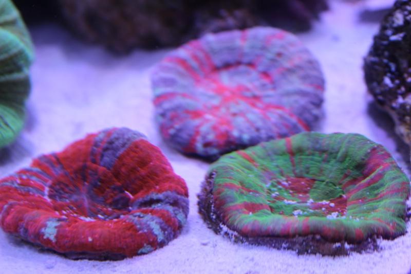 Le nouveau Reef d'Alexpilon, 600l custom - Page 3 Img_6110