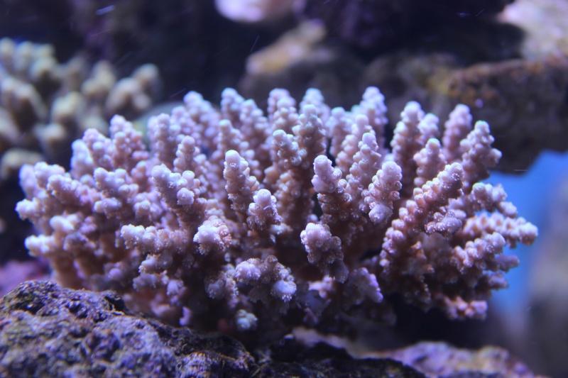 Le nouveau Reef d'Alexpilon, 600l custom - Page 3 Img_6111