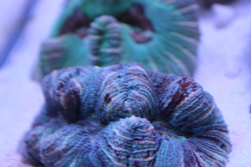 Le nouveau Reef d'Alexpilon, 600l custom - Page 3 Img_6114