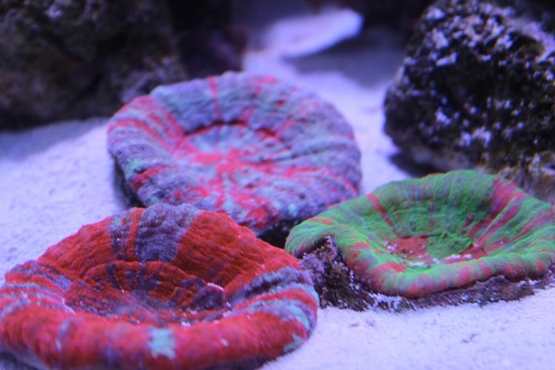 Le nouveau Reef d'Alexpilon, 600l custom - Page 3 Img_6115