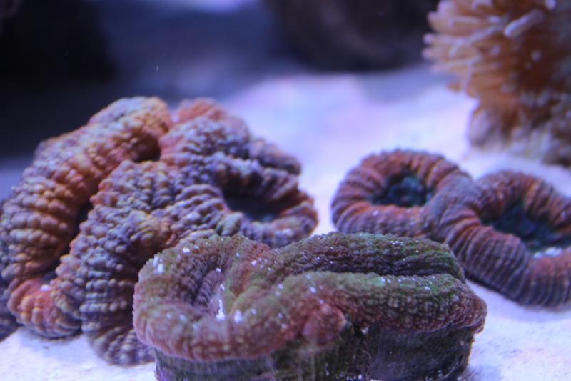 Le nouveau Reef d'Alexpilon, 600l custom - Page 3 Img_6210