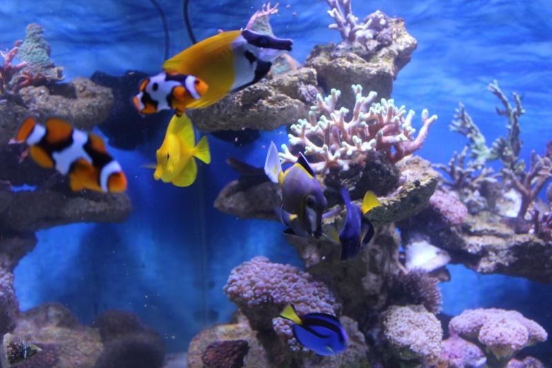 Le nouveau Reef d'Alexpilon, 600l custom - Page 3 Img_6212
