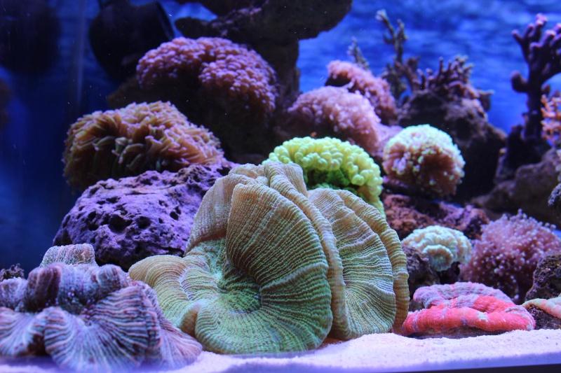 Le nouveau Reef d'Alexpilon, 600l custom - Page 3 Img_6217