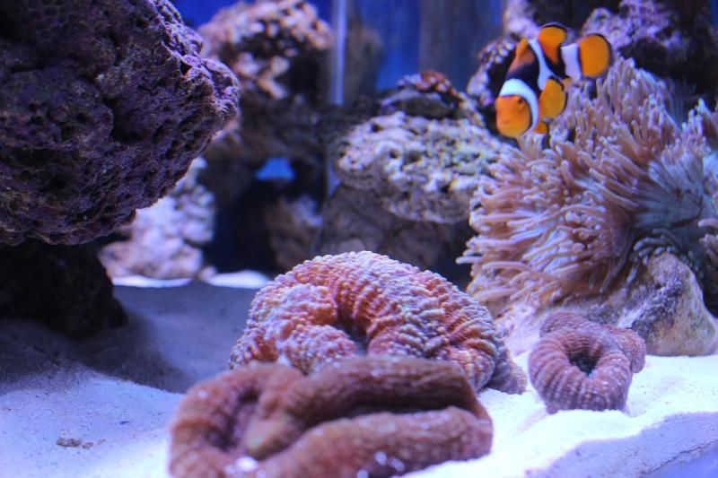 Le nouveau Reef d'Alexpilon, 600l custom - Page 3 Img_6219