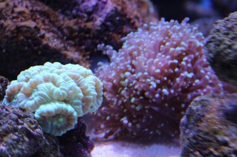 Le nouveau Reef d'Alexpilon, 600l custom - Page 3 Img_6220