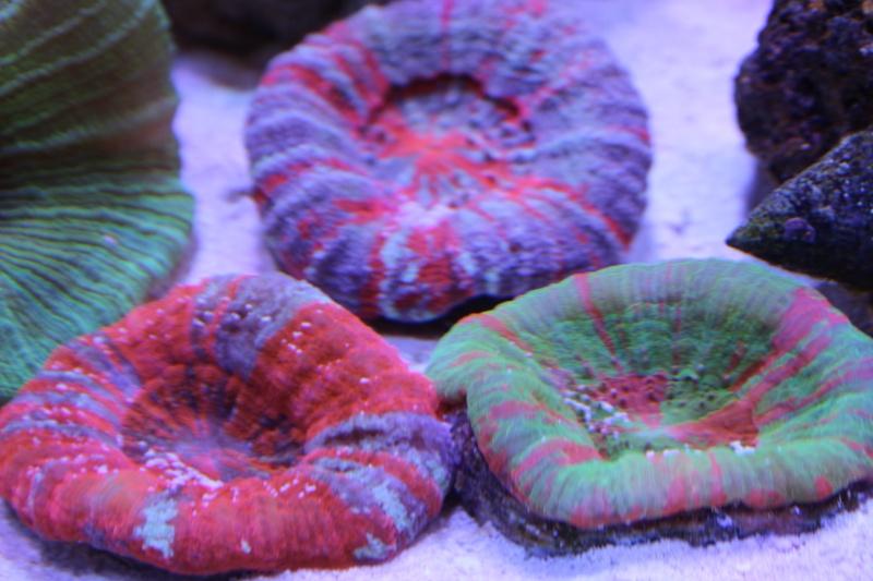 Le nouveau Reef d'Alexpilon, 600l custom - Page 3 Img_6221