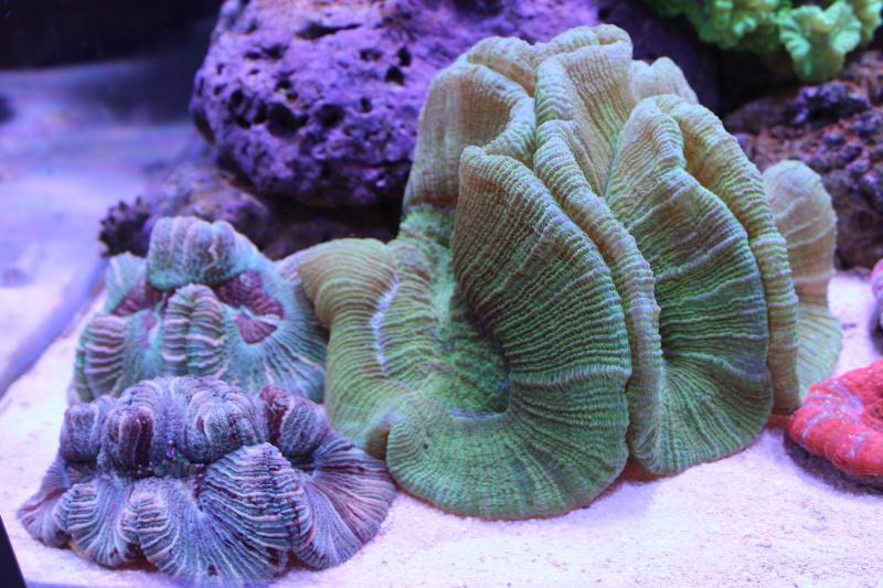 Le nouveau Reef d'Alexpilon, 600l custom - Page 3 Img_6222