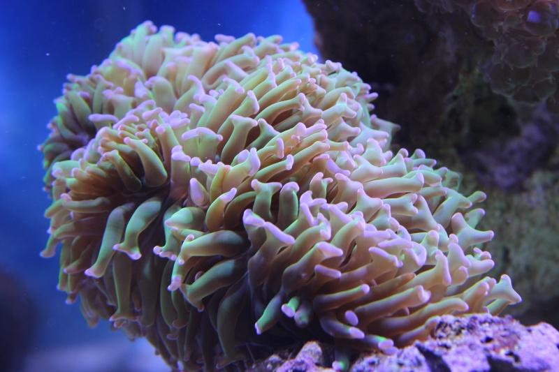 Le nouveau Reef d'Alexpilon, 600l custom - Page 3 Img_6223