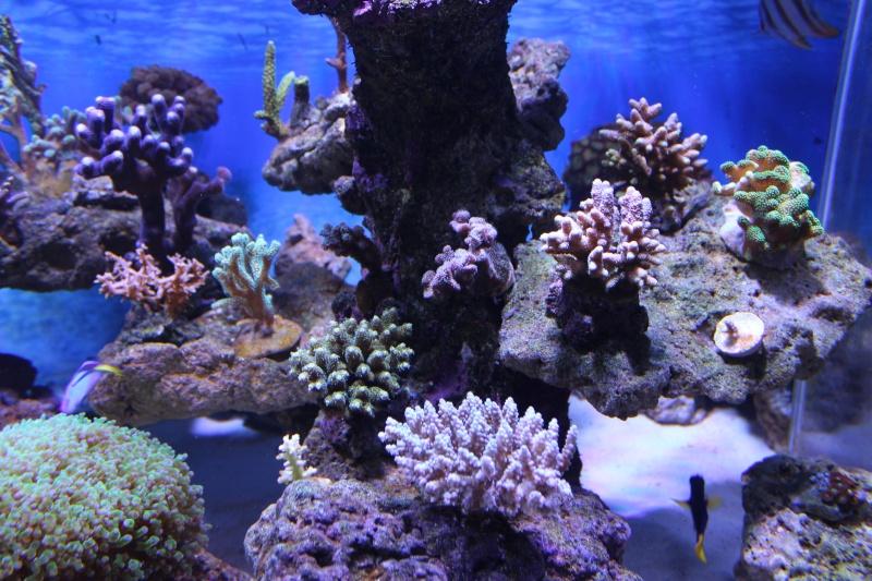 Le nouveau Reef d'Alexpilon, 600l custom - Page 3 Img_6226
