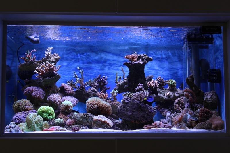 Le nouveau Reef d'Alexpilon, 600l custom - Page 3 Img_6313