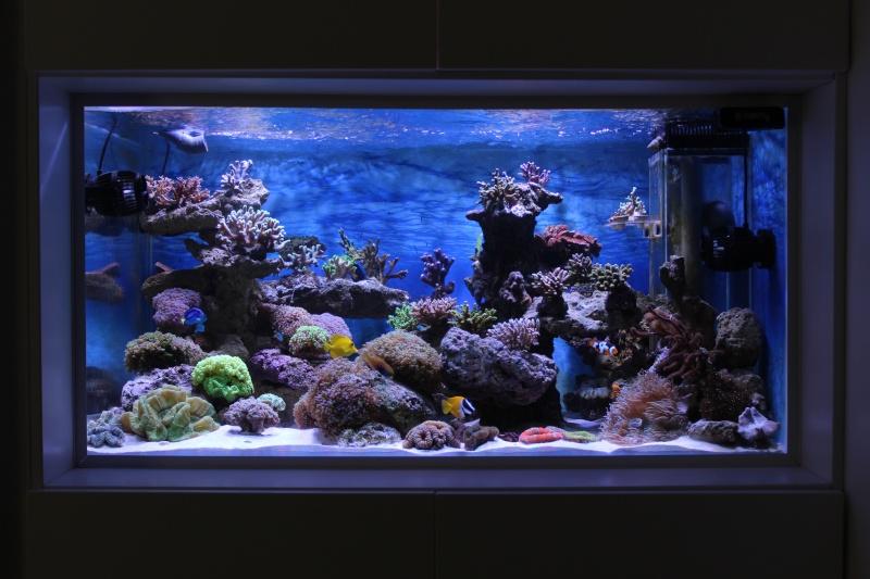 Le nouveau Reef d'Alexpilon, 600l custom - Page 4 Img_6314
