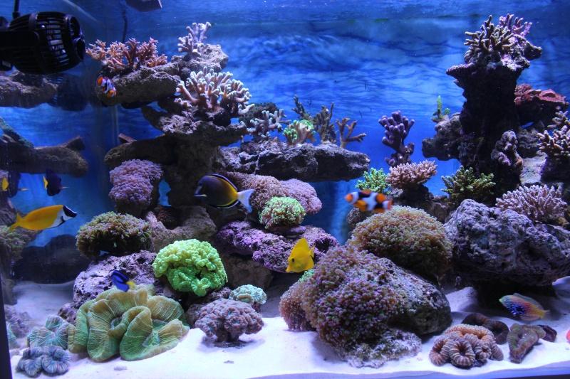 Le nouveau Reef d'Alexpilon, 600l custom - Page 4 Img_6315