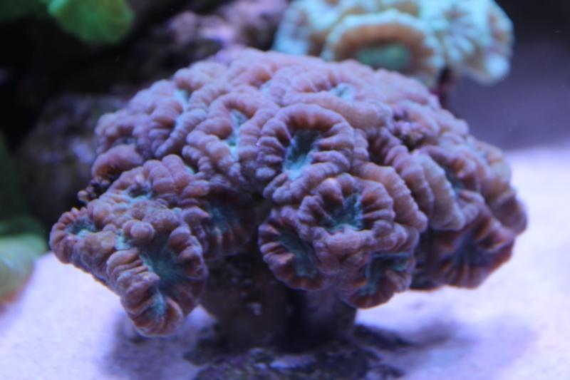 Le nouveau Reef d'Alexpilon, 600l custom - Page 4 Img_6316