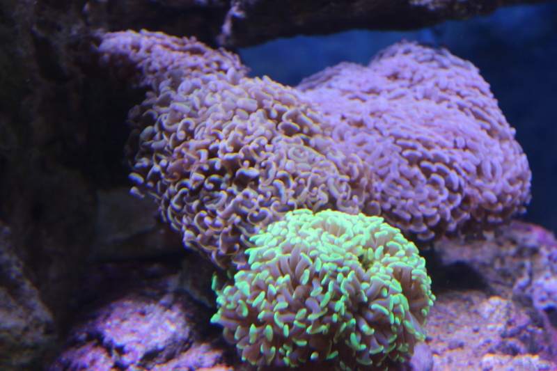 Le nouveau Reef d'Alexpilon, 600l custom - Page 4 Img_6320