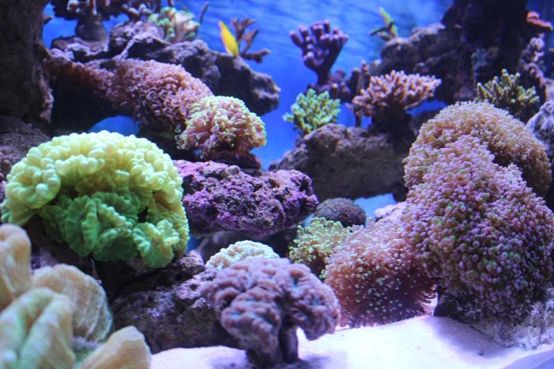 Le nouveau Reef d'Alexpilon, 600l custom - Page 4 Img_6321