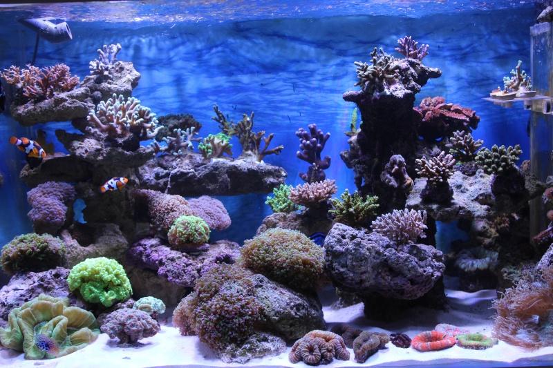 Le nouveau Reef d'Alexpilon, 600l custom - Page 4 Img_6323