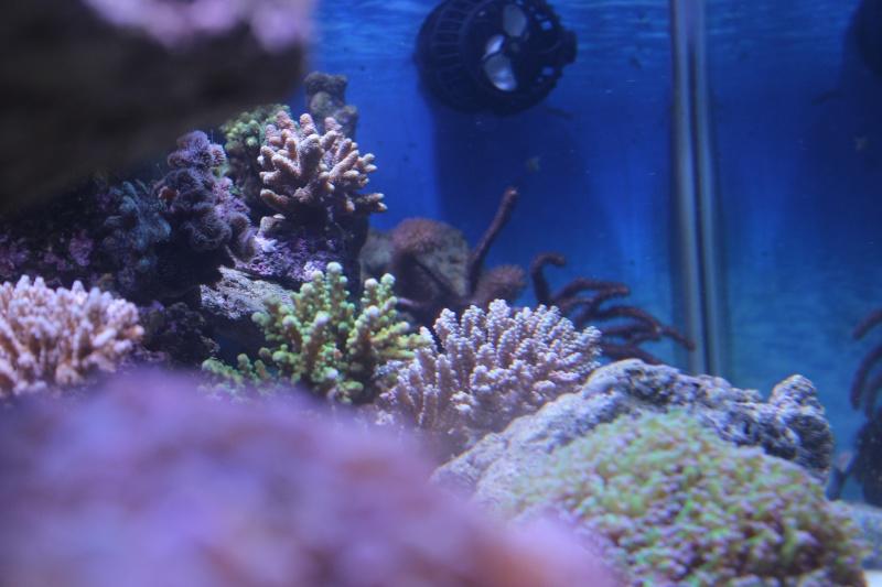 Le nouveau Reef d'Alexpilon, 600l custom - Page 4 Img_6324