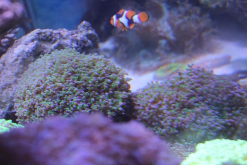 Le nouveau Reef d'Alexpilon, 600l custom - Page 4 Img_6326