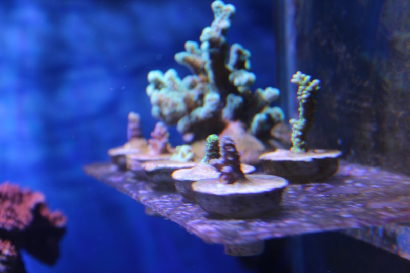 Le nouveau Reef d'Alexpilon, 600l custom - Page 5 Img_6717